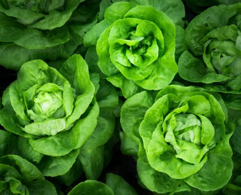 Disease-fighting foods: greens